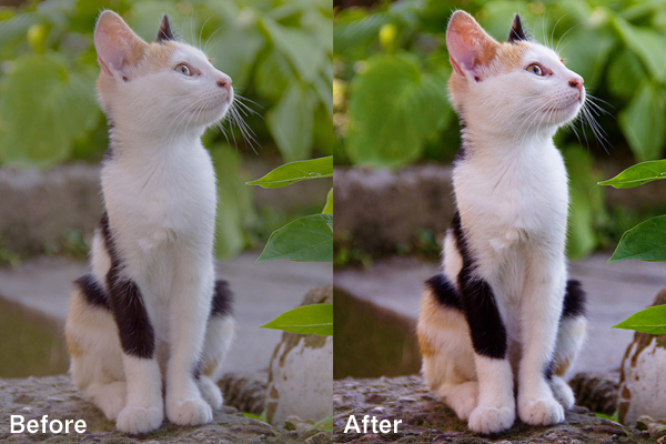 cat-after2